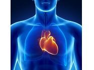 Cardiovascular Diagnostic Assay Kits