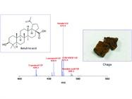 Food Mass Spectrometry