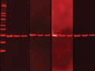 Individual Cell Analysis for Protein Expression and Cell Health Markers