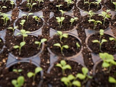 消费者期待农药安全大麻到镜子农药安全食品:会议预期