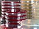 提高效率的细胞培养特性及其应用