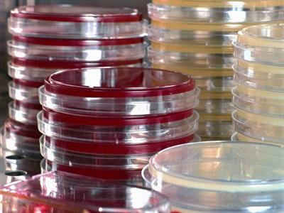 细胞培养特点,以提高效率和应用