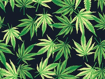 千万不要用水向下大麻质量