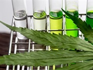 大麻测试与分析
