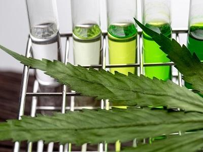 Cannabis Testing and Analysis
