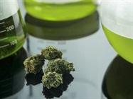 大麻样品制备