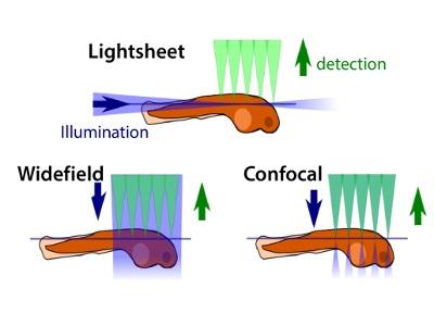 Selective Plane Illumination Microscopy from Applied Scientific Instrumentation