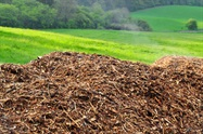 Biotech Breakthrough Turns Waste Biomass into High-value Chemicals