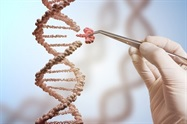 CRISPR-Cas9 Study Shows Low Risk of Off-target Editing