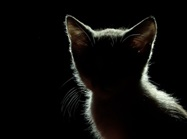 Body Farm Cameras Reveal Insights on Feral Cat Scavenging
