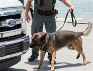 Helping State and Local Canine Teams be REDDI for Anything