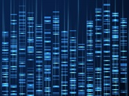 AAFS Publishes New Probabilistic Genotyping Standard