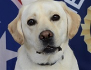 Tennessee Welcomes First Electronic Storage Detection K-9