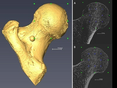 Method to Estimate Body Mass of Human Remains Yields More Accurate Profile